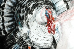 Turkey Thrumming